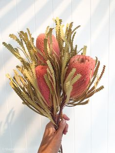 Dried Banksia | Apricot – Magnolia Lane Beautiful dried flowers to compliment your home decor.  Enjoy for months to come MLx #driedflowers #banksia #driedbanksia #interiorstyle #interiorstyling #homestyling Artificial Floral Arrangements, Dried Flower Arrangements, Dried Flowers, Australian Wildflowers, Australian Native Flowers, Dry Plants, Faux Plants, Australian Native Garden, Flower Bar