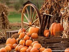 My favorite time of the year--pumpkins, harvest, falling leaves, 60's weather, etc.
