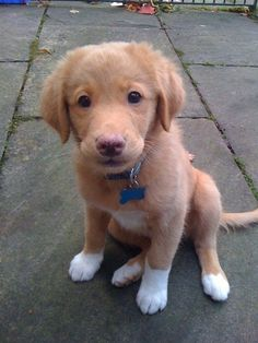 Little Alfie could've broken the app with those puppy-dog eyes… | 14 Cuties Who Could Definitely Break The Internet