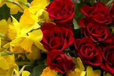 rose images background