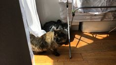 The cat from No 9 Cat Gif, Treats, Videos, Sweet Like Candy, Goodies, Sweets, Snacks