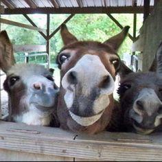 3 stooges : )