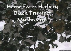 Black Trumpet Mushroom Dried    At Home Farm Herbery we love mushrooms of any kind and especially Black Trumpet Mushrooms which are actually a very common variety of mushroom, but they are dark, small and grow in the forest so they are very hard to find thus making them the most expensive mushrooms we offer. We use these when we make our incredible Black Trumpet Mushroom Duck Salami or sausages.    We love their smoky, rich buttery and elegant flavor with a pleasant, fruity aroma...