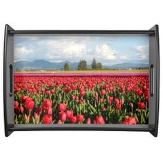 Clouds Mountains and Tulips on large #Zazzle tray.  #skagitvalley #tulips #skagitvalleytulipfestival #tulipstray #uniquegifts
