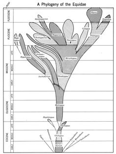 Trees of Life: A Visual History of Evolution | Brain Pickings