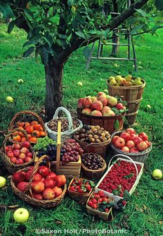 Fall harvest baskets ~