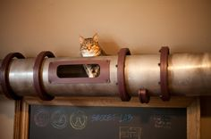 Steampunk Cat Transit System by Because We Can