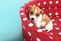 BrightNest   De-Stink Your Dog's Bed