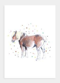 DB21 Pony (Pack of 6)