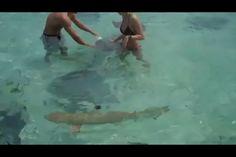 Playing with stingrays & black tip reef sharks in Bora Bora, Tahiti...