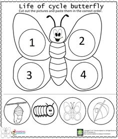 Life Of Cycle Butterfly Worksheet We prepared a life of cycle butterfly worksheet for kindergarten, preschool, and toddlers. With this worksheet, kids will learn how [.] Life Life Of Cycle Butterfly Worksheet Tree Life Cycle, Human Life Cycle, Life Cycle Craft, Preschool Worksheets, Preschool Activities, Counting Worksheet, Fun Worksheets For Kids, Preschool Projects, Classroom Projects