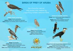 The weather at home is for the BIRDS!!!! i need to head to ARUBA! birds of ARUBA    #aioutlet