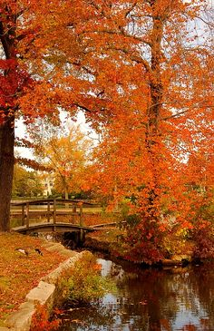 ✮ A Morning In Autumn - Lake Carasaljo, NJ I am a Jersey girl. Brown Smith World Beautiful World, Beautiful Places, Autumn Lake, Autumn Scenes, Seasons Of The Year, All Nature, Fall Pictures, Fall Pics, Retro Pictures