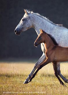 Mare and foal in perfect step. How amazing!