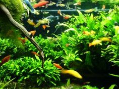 Teach Fish Keeping Online ~ article from LearnByCam...