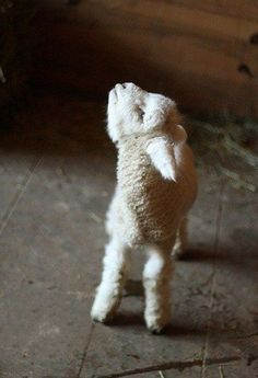 "This little lamb speaks for all animals that end up on humans plates. He is saying, ""Please don't eat me!"" You have a choice to not eat cute animals. Go Vegan - every meal you eat without meat being on your plate, you are saving lives. Love All Animals Cute Baby Animals, Farm Animals, Animals And Pets, Funny Animals, Nature Animals, Cute Creatures, Beautiful Creatures, Animals Beautiful, Beautiful Cats"