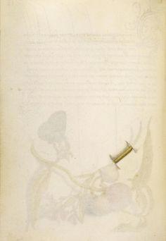 [folio 61v]Trompe l'Oeil Stem of Milkwort; Joris Hoefnagel (illuminator) [Flemish / Hungarian, 1542 - 1600]