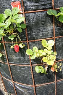 strawberry tower - Google Search