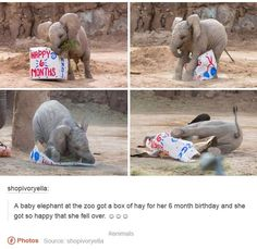 Baby Elephants Photos And Memes That Will Make You Smile Instantly - World's largest collection of cat memes and other animals Cute Little Animals, Cute Funny Animals, Funny Cute, Hilarious, Funny Animal Memes, Funny Animal Pictures, Funny Memes, Cat Memes, Funny Captions