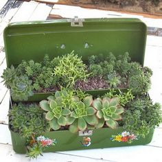 repurposed planter for succulents-this would be a beautiful accent in a garden. Cacti And Succulents, Planting Succulents, Planting Flowers, Succulent Terrarium, Flowers Garden, Succulent Display, Succulent Ideas, Silk Flowers, Cactus E Suculentas
