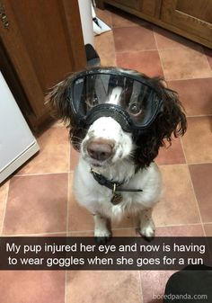 My Pup Injured Her Eye And Now Is Having To Wear Goggles When She Goes For A Run