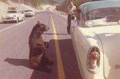 22 Funny Vintage Photos of Lovely Animals in the Last Decades