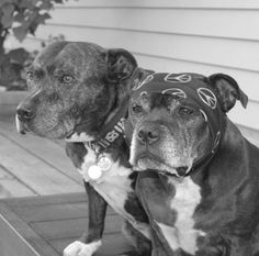 I think these babies are all set for a stroll. Wanna join them?@staffies_rocco_and_maggie