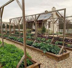 Beautiful vegetable garden ideas so you can create a stunning backyard. Productive vegetable garden beds and landscape garden ideas Veg Garden, Garden Types, Vegetable Garden Design, Vegetables Garden, Vegetable Gardening, Fresh Vegetables, Terraced Vegetable Garden, Garden Gate, Garden Soil