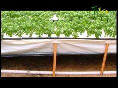 ▶ Como hacer Cultivos Aeroponicos Juan Gonzalo angel TvAgro - YouTube