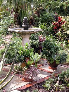 images about Gardening Cacti Succulents on Pinterest