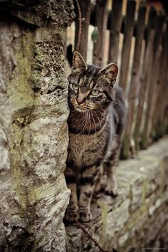 Beautiful street cat - this is an exceptionally lovely photo. So moving. Love it.