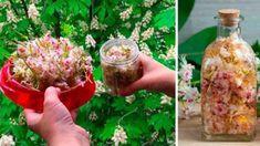 Kaštanový květ – cenný lék, který máte v květnu zdarma: Snižuje vysoký tlak, léčí bolavé klouby, křečové žíly i ekzémy! Celery, Sprouts, Vodka, Cabbage, Herbs, Vegetables, Ethnic Recipes, Food, Alcohol