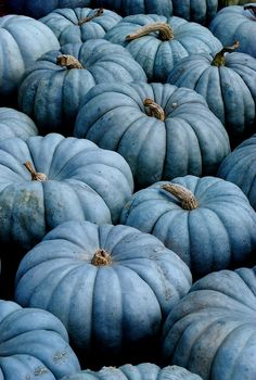 Blue pumpkins awh theyre my favorite color now 😁 Autumn Aesthetic, Blue Aesthetic, Jarrahdale Pumpkin, Wedding Reception Ideas, Chinoiserie Chic, Happy Fall Y'all, Soft Summer, Samhain, Fall Pumpkins