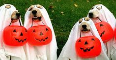 Halloween dog parade: parata di beneficenza a 4 zampe - CGTVChannel Scary Costumes, Scary Halloween Costumes, Halloween Costume Contest, Pet Costumes, Halloween Mono, Cute Halloween, Halloween Ideas, Pug, Happy Halloween Quotes