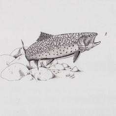 Brook Trout Sketches … Pinteres… - 500x500 - jpeg