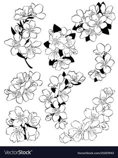 Set of cherry blossoms collection of flowers of vector image on VectorStock Japanese Drawings, Japanese Tattoo Art, Japanese Flower Tattoos, Japanese Blossom, Japanese Flowers, Cherry Blossom Drawing, Cherry Blossom Outline, Cherry Blossoms, Japan Flower