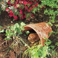 Welcome toads to your garden tutorial for making a toad house content in a cottage diy outdoor projects pinterest toad house toad and content publicscrutiny Gallery