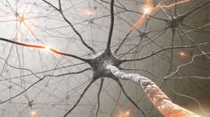 #Neuroplasticity: How To Rewire Your Brain - How to develop mental flexibility, change habits, stop procrastination and alter memories based on #neuroscience research