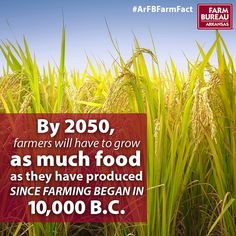Farm Fact Friday | By 2050, farmers will have to grow as much food as they have produced since farming began in 10,000 B.C.