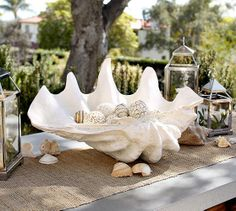 Home Furnishing Marine Sea Decor Giant Clam Tridacna Big Conch Natural Coastal Christmas Decor, Coastal Decor, Coastal Living, Christmas Decorations, Pottery Barn, Giant Clam Shell, Shell House, Shabby Chic Stil, Interior Paint Colors