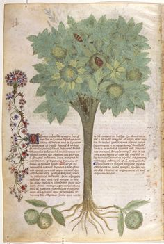 On Plants — Viewer — World Digital Library