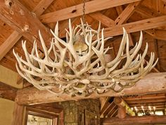 HGTV takes you on a tour of the sprawling Georgia mountain home of wildlife guru Jack Hanna's sister, built as a replica of his Montana ranch. Jump The Shark, Shark Pictures, Wooden Wall Panels, Dark Wood Stain, Home Interior Design, Interior Designing, Interior Ideas, Loom Patterns, Hgtv