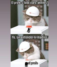 """75 Me gusta, 0 comentarios - Gatos Cool (@gatoscooloficial) en Instagram: """"yo, en las clases en línea . . . #gatoscool😸 #memesdegatoscool #gatos_cool #clasesenlinea…"""""""