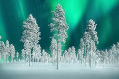 Northern Lights In Sweden by Kevin McNeal on 500px, Sweden