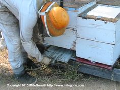 Letter to all Okanagan Beekeepers! If you live in the Okanagan, or know a beekeeper in the Okanagan, please pass on this letter to them. Thanks in advance. Bee Skep, Bee Keeping, Bees, Letter, Honey, Group, Live, Board, Bee