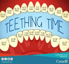 Teething Time Timeline