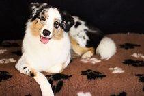 Dogs, Animals, Cuddling, Animales, Animaux, Pet Dogs, Doggies, Animal, Animais