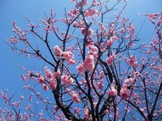 Image via We Heart It https://weheartit.com/entry/135926477/via/13802995 #blossom #flower #nature #photography #pink #tree