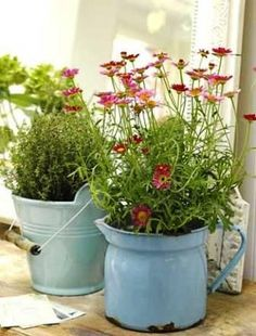 Got a favourite jug or bucket that would look great as a planter but don't want to drill drainage holes? Use as a Cache Pot instead: pop your favourite herb or flower pot INSIDE on a layer of gravel & just change the inner pot with the seasons - easy! | The Micro Gardener