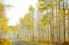 "The Aspens. ""This is the reason to visit Utah in autumn."" -Dooce"